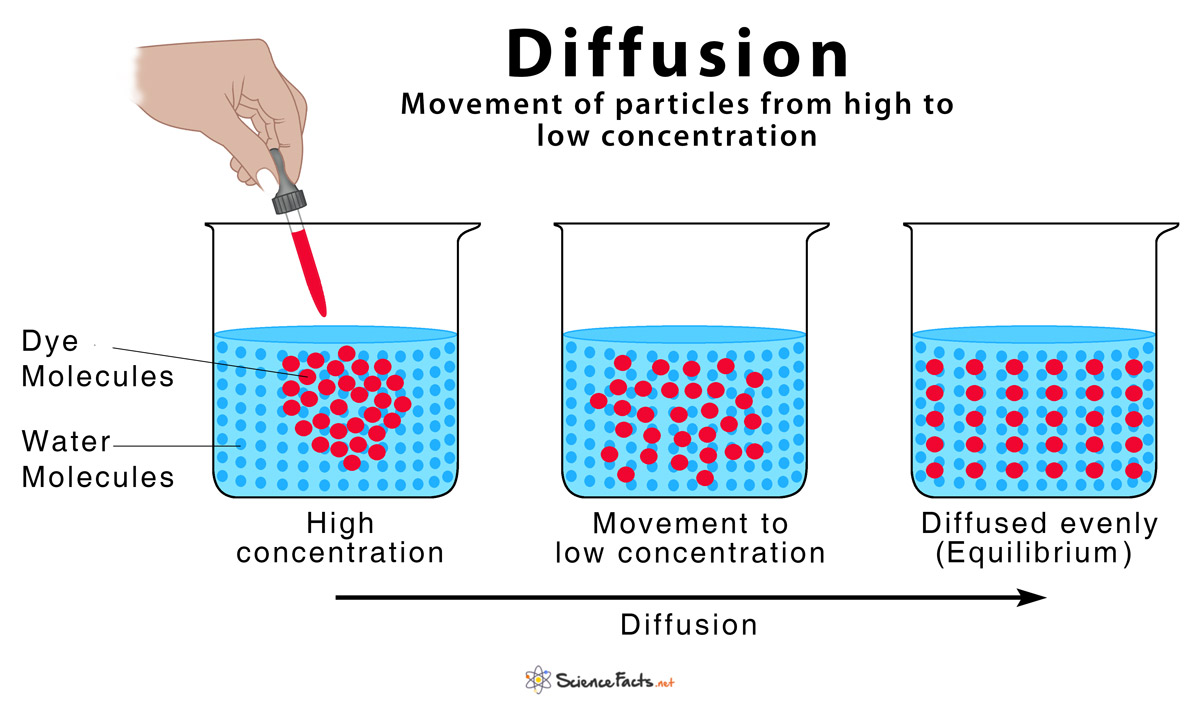 Diffusion  Definition And How Does It Occur  With Diagram