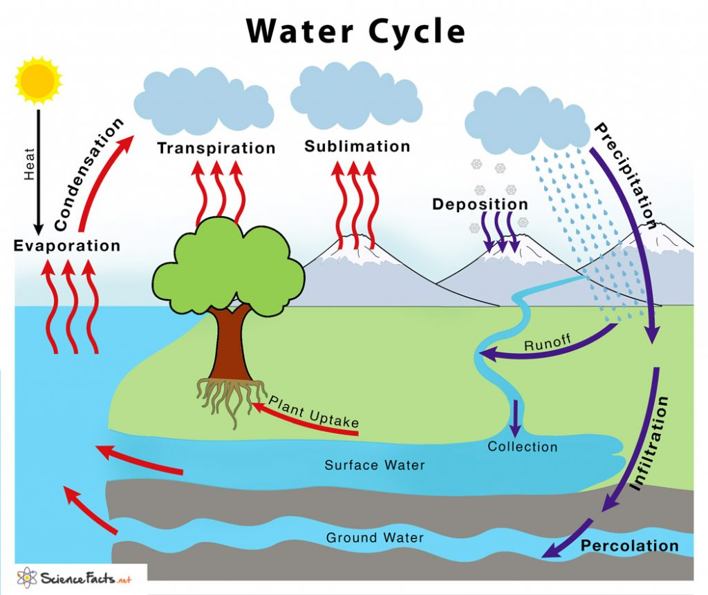 Water Cycle  U2013 Definition  U0026 Steps Explained With Simple Diagram