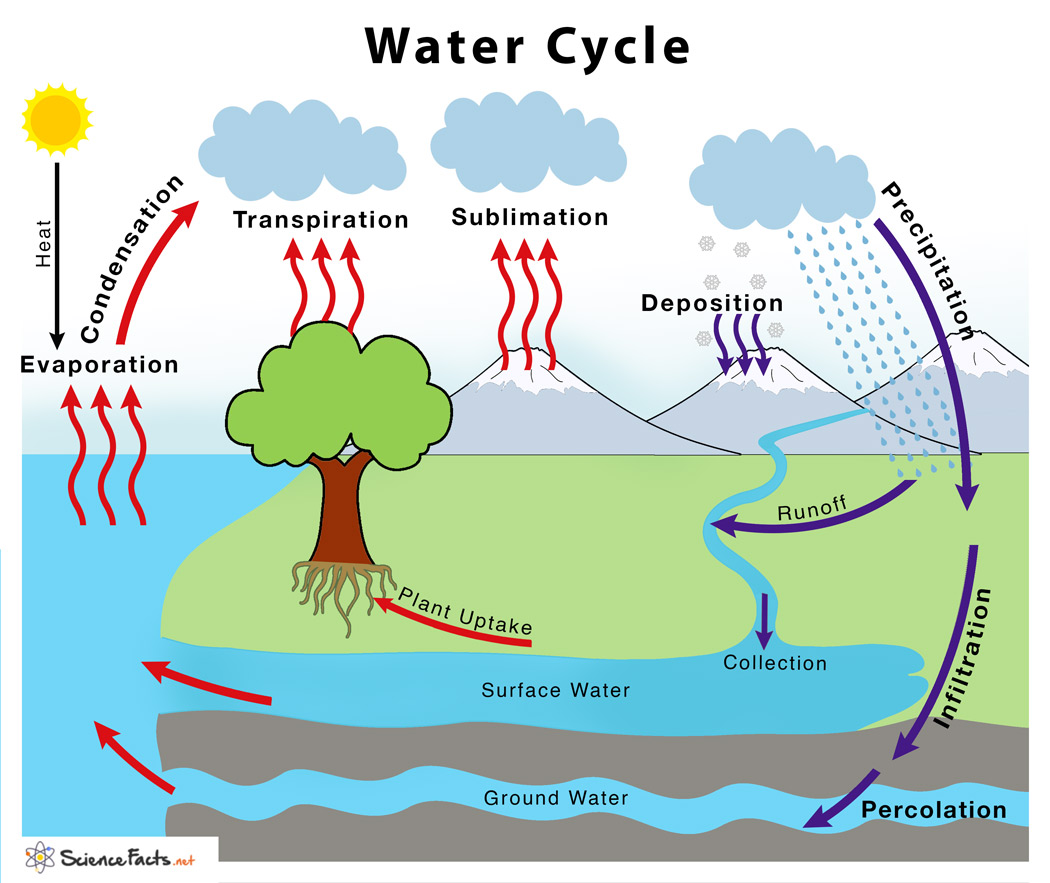 Water Cycle Definition Steps Explained With Simple Diagram