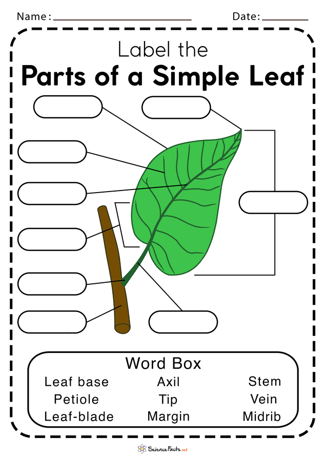 Parts of a Leaf Worksheets | Free Printable